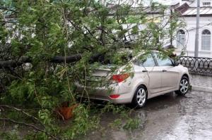 Ликбез: что делать, если на ваш автомобиль упало дерево
